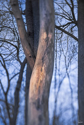 attention to shapes in trees via a tilt shift lens