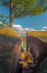 kristen-westlake-20150429-pine-cone-in-crevice-with-tree-0014.jpg