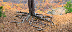 Levis Mounds panorama Photography in the fall